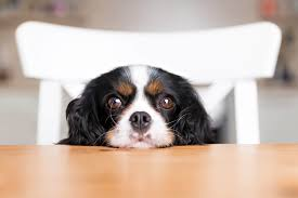 How and When to Switch from Puppy to <b>Adult Dog</b> Food   Blue Buffalo