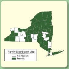 Menyanthaceae - Family Page - NYFA: New York Flora Atlas - NYFA ...