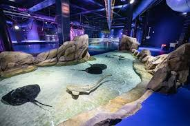 <b>Shark</b> and Ray Immersion   Georgia Aquarium