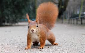 Image result for squirrel cute