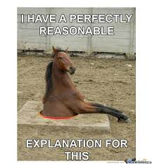 Horses Memes. Best Collection of Funny Horses Pictures via Relatably.com