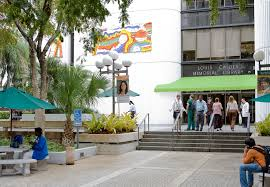 miller school of medicine campus university of miami graduate the calder library advances informed decision making and knowledge transfer in support of the university of miami s miller school of medicine