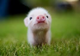 """Résultat de recherche d'images pour """"photo d'animaux trop mignon"""""""