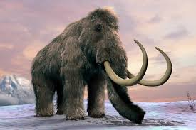 woolly mammoths wiped out by grass invasion