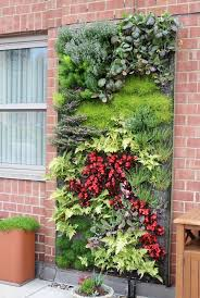 gallery outdoor living wall featuring: view in gallery outdoor living wall featuring a range of plants