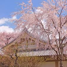 japanese anime flowering days hugging pillow cover case pillowcase decorative pillows 2way 50 160cm
