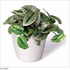 common types of low light plants best low light office plants