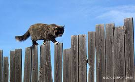 Image result for cat on a fence