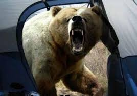 Image result for scary bear images