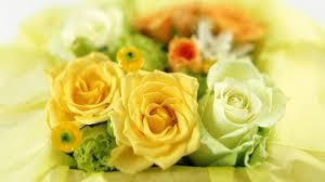 Resultado de imagem para rosas amarelas de amor