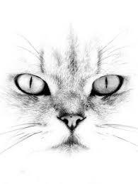 коты... И кошки...