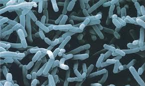Resultado de imagen de microorganismos efectivos