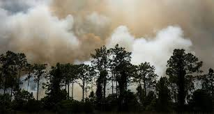 I Smell Smoke Outside...Is it Safe <b>for My Dog</b> to be Outdoors? | Gallant