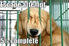 Escape Attempt 5 Percent Complete | WeKnowMemes via Relatably.com
