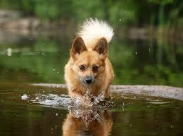 Bildresultat för hund bild