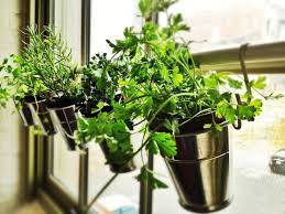 Kitchen Windowsill Herb Garden 22 Ikea Hacks For The Plants In Your Life Brit Co