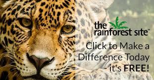The <b>Rainforest</b> Site   Click to Save The <b>Rainforest</b>