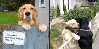 Картинки по запросу табличками 'Осторожно, злая собака!'