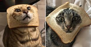 Inbread <b>Cats</b>: <b>Cats</b> In <b>Bread</b>