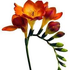 My Garden Images?q=tbn:ANd9GcR_ecum3mBvi10Ii7xohJmQpmVASINKoOehKRJRrpmocnfX3HWn