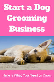 best dog business ideas dog daycare dog if you are wondering how to start a dog grooming business then this article will