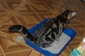 Купить <b>туалет</b> для кошки по низкой цене с доставкой по Москве и ...