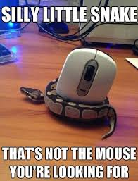 Silly little snake | Funny Dirty Adult Jokes, Memes & Pictures via Relatably.com