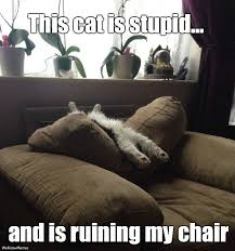 This Cat Is Stupid And Is Ruining My Chair Cat Meme - Cat Planet ... via Relatably.com