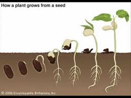 Image result for seedling photos