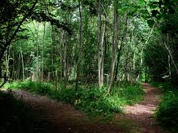 Image result for picture of split paths in the woods