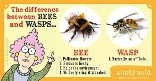 Differences between bees and wasps | Aunty acid sayings ... via Relatably.com