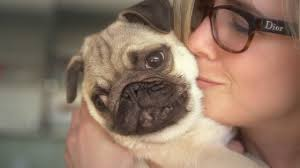 Facts That Prove <b>Pugs</b> Are The Best <b>Dogs</b> Ever - YouTube
