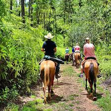 Image result for belize horseback riding