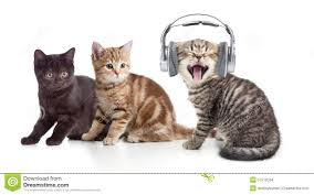Image result for cat with kittens images