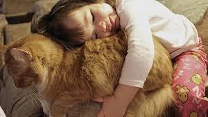 кошка рыжая девочка обнимает ее