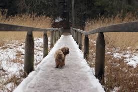 Free Images : nature, <b>forest</b>, <b>snow</b>, winter, boardwalk, <b>bridge</b>, view ...