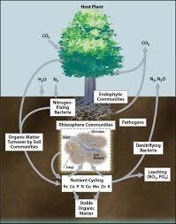 plant microbe interactions original jpg plant microbe interactions