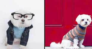 """Dog fashion & <b>Designer Dog Clothes</b>"" – TOP 10 BRANDS – Marc ..."