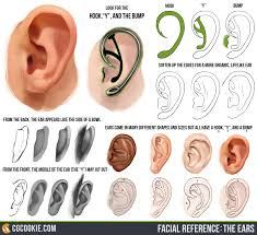 the ear reference cgcookie facialreference theears