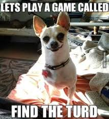 Animals* on Pinterest | Chihuahuas, German Shepherds and Funny Dogs via Relatably.com