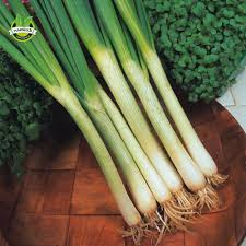 Aliexpress.com : <b>Buy</b> Vegetable Spring Onion White Lisbon 800 ...