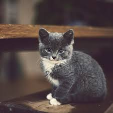 cute cats =) Images?q=tbn:ANd9GcRauy_DFkOE4nLSk3qDQBMnYalbC_OcDcg1nHV6U-DkHwiBfIXI