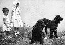 Ποιοι μεγάλοι σκύλοι το τρίχωμα τους δεν αλλάζει;