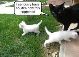 Funny/Cute Animal Pics - Page 2 Images?q=tbn:ANd9GcRb3JVKuSKL9UVLSbp9oUPdJc0xcWnZHrtTVF5TeNNb3x-fjt-0