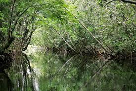 Resultado de imagen para humedales, caños y manglares en el zulia
