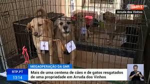 GNR resgata 55 animais de propriedade em Arruda dos Vinhos