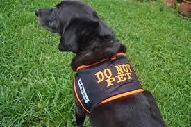 DO NOT <b>PET Dog</b> Vest <b>High Visibility</b>