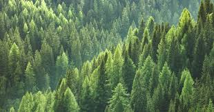 Did You Know That There Are More <b>Trees</b> On Earth Than Stars In ...