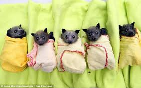 Image result for baby bat