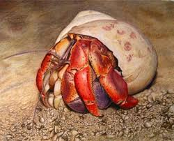 Image result for hermit crab